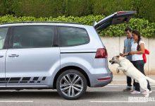 Photo of Come trasportare il cane in auto e consigli per il viaggio