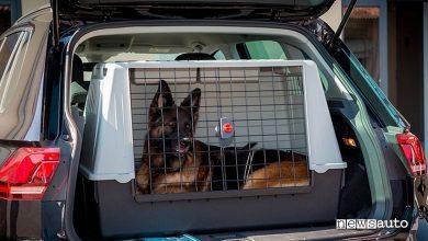 Photo of Lasciare il cane in auto, cosa si rischia, come proteggerlo e precauzioni d'estate